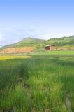 grässlätt Arkivbild