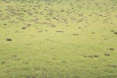 grässlätt Fotografering för Bildbyråer