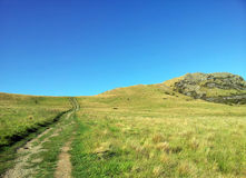 Grässlätt för Nya Zeeland kulleöverkant Royaltyfria Foton