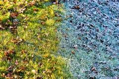 Grässlätt i vinter Fotografering för Bildbyråer
