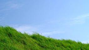 Grässlätt med blå himmel i sommarsäsongen, bakgrundsmaterial stock video