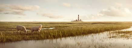 Grässlätt med får och en fyr på Nordsjön royaltyfri bild