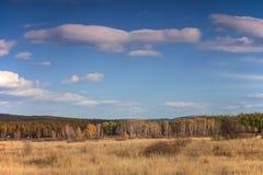 Grässlätt- och gulingträd Royaltyfri Fotografi