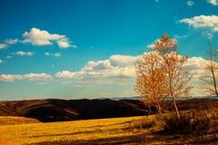 Grässlätt och himmel Royaltyfria Bilder