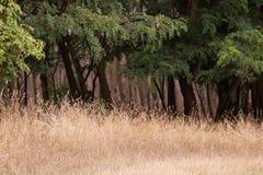 Grässlätt och skog Royaltyfri Bild