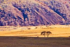 Grässlätt och träd Royaltyfri Foto
