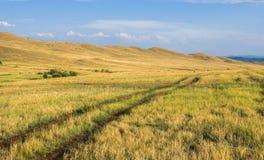 Grässlätt på Okhota i sommar Royaltyfria Bilder