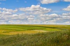 Grässlätt under himmel Arkivbild