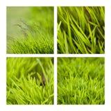 grässlättar Royaltyfri Fotografi