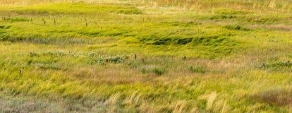 grässlättar Fotografering för Bildbyråer