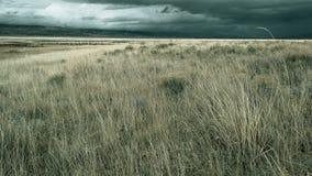 grässlättar Arkivbilder