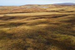 Grässlättar bredvid Eshaness, Shetland öar Royaltyfri Bild