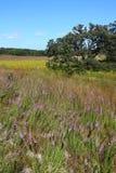 grässlättillinois nachusa Arkivbilder