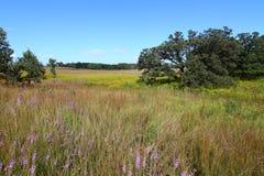 grässlättillinois nachusa Arkivfoto