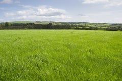 grässlättlandskap Royaltyfri Fotografi