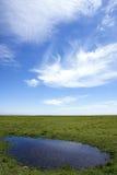 grässlättlandskap Arkivbild