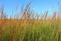 Grässlättlandskap Illinois Fotografering för Bildbyråer