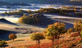 grässlättmorgon Arkivfoto