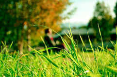 grässolnedgång Royaltyfria Bilder