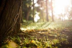 grässolnedgång Arkivbilder