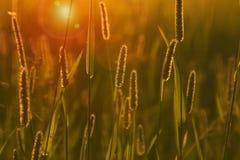 grässolnedgång Arkivbild