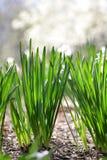 grässommar royaltyfri fotografi