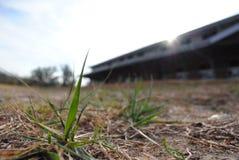 Grässtrå Royaltyfria Foton