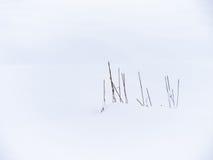 Grässtrå i vinter Arkivfoto