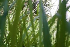 Grässtråbakgrundstapet Arkivbilder