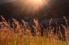 Grässtrån Arkivfoto