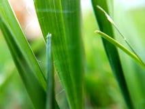 Grässtrån arkivbild