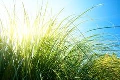 grässun Royaltyfria Foton