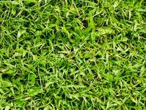 Grästextur eller gräsbakgrund arkivfoto