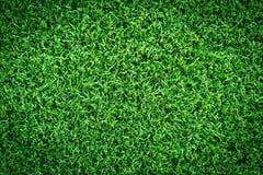 Grästextur eller gräsbakgrund grönt gräs för golfbana, fotbollfält eller design för sportbakgrundsbegrepp royaltyfria foton