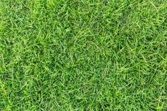 Grästextur eller gräsbakgrund grönt gräs för golfbana, fotbollfält eller design för sportbakgrundsbegrepp royaltyfri foto