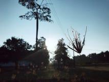 Grästräd och himmel royaltyfri fotografi