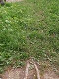 Gräsväg som fotvandrar naturen fotografering för bildbyråer