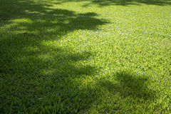 gräsvall Royaltyfri Fotografi