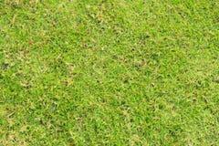 Gräsvallgräsmattatextur i trädgård arkivfoto