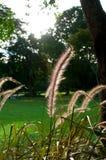 gräsvass Royaltyfria Foton