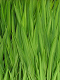 gräsvasser arkivfoto