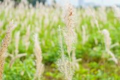 Gräsvasserna under vind Arkivfoto