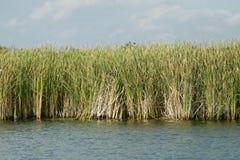 gräsvatten Arkivfoto