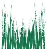 gräsvektor Arkivfoto