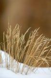 gräsvinter arkivfoto