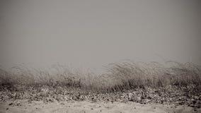 gräswind Royaltyfri Foto