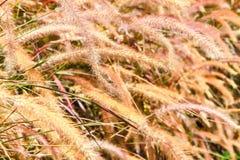 gräsyellow Royaltyfria Bilder