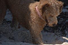 Gräva för hund arkivbild