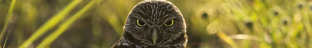 Gräva Owl Banner Arkivfoto