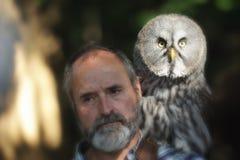Gräva owls, Athenecunicularia. Arkivbild
